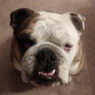 Bulldog573